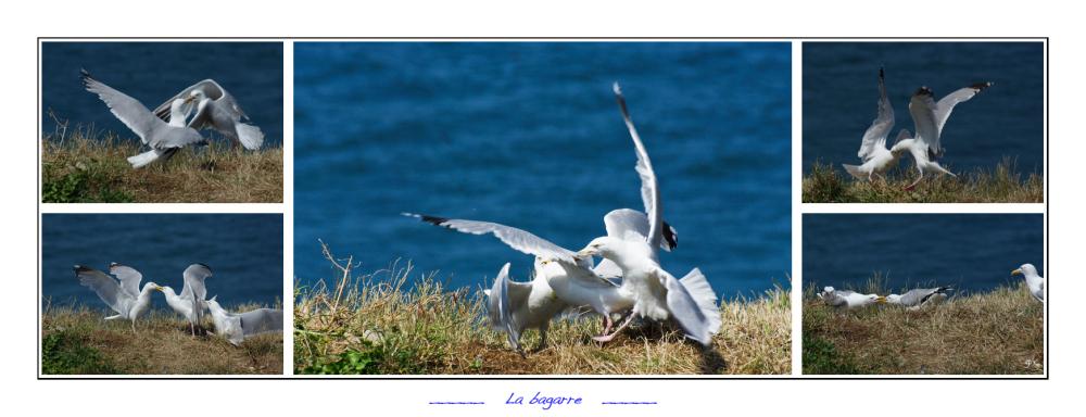 La bagarre - The fight
