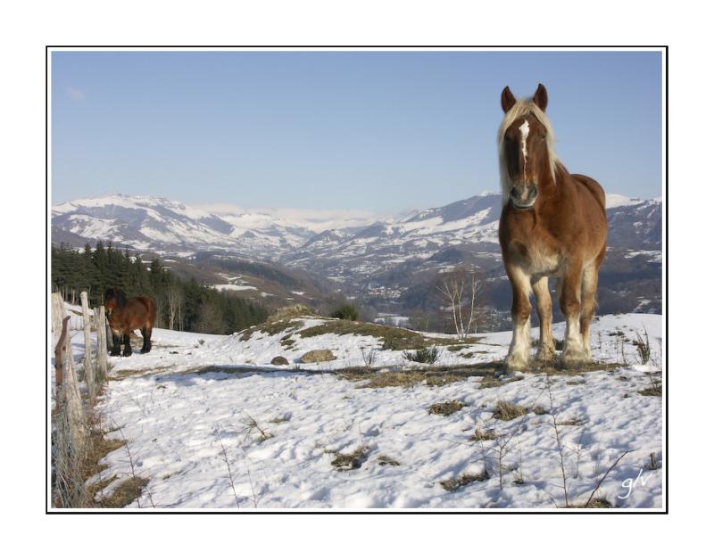 interlude animalier - le cheval
