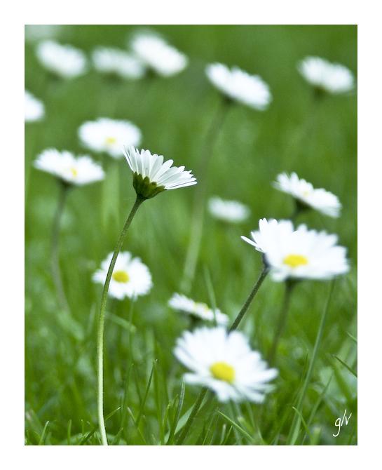 Un monde fleuri / a flowery world (04)