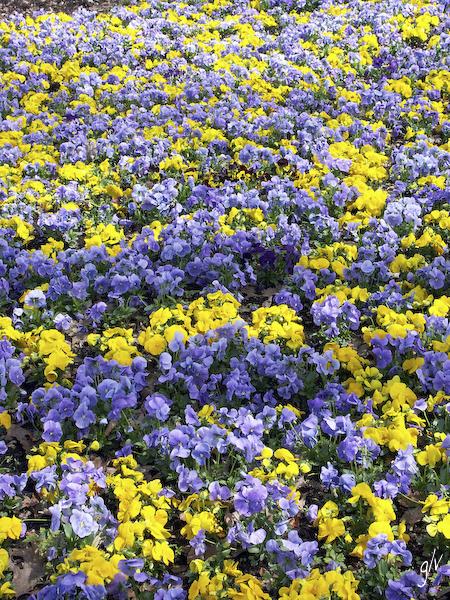 Un monde fleuri / a flowery world (06)