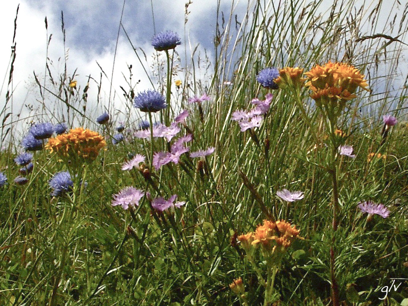 Un monde fleuri / a flowery world (07)