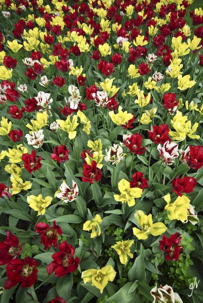 Un monde fleuri / a flowery world (10)