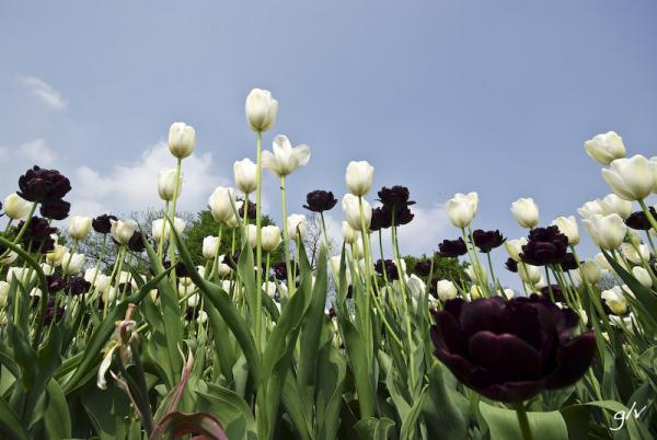 Un monde fleuri / a flowery world (11)