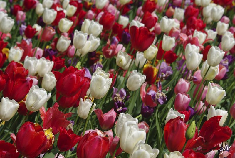 Un monde fleuri / a flowery world (13)