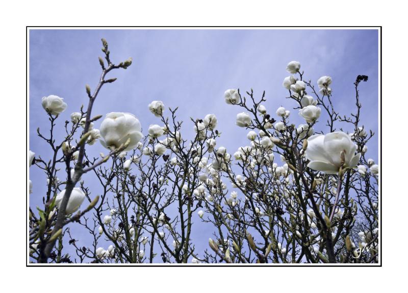 Un monde fleuri / a flowery world (15)