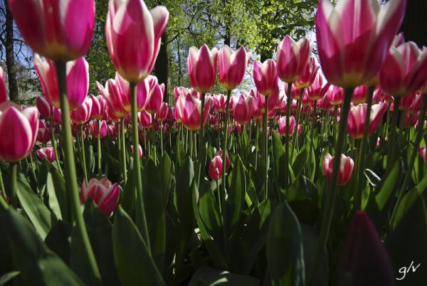 Un monde fleuri / a flowery world (19)