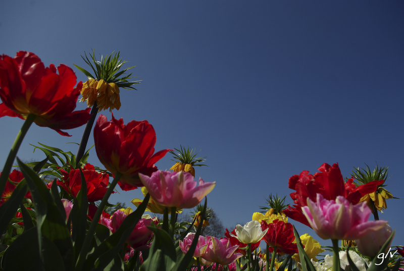 Un monde fleuri / a flowery world (20)