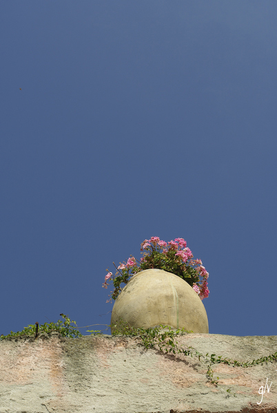 Un monde fleuri / a flowery world (21)