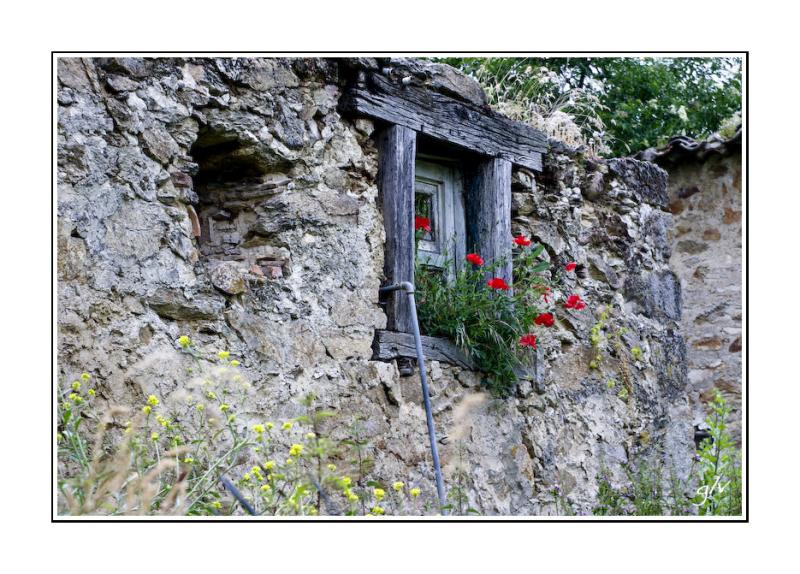 Un monde fleuri / a flowery world (22)