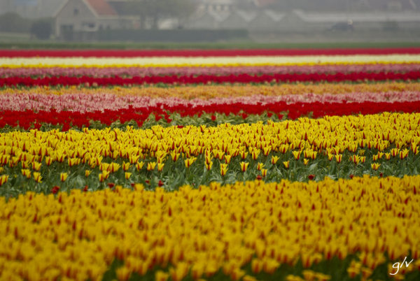 Un monde fleuri / a flowery world (25)