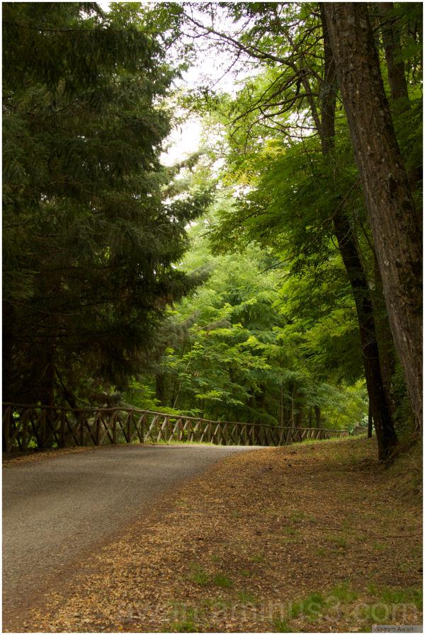 Go Green.. by walking on Green Street