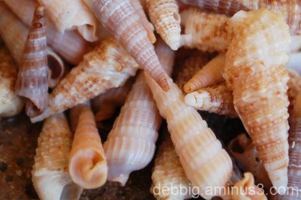 seashells Florida