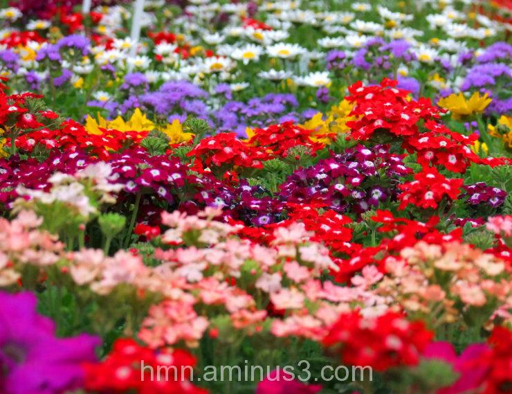 alot of flower 2 ( یه عالمه گل)