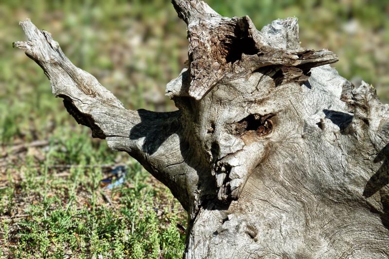 zombie wood yellowstone