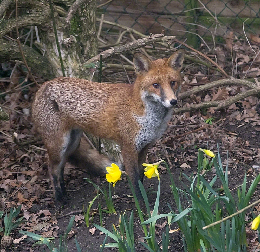 The quick brown fox....