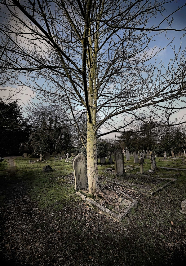 Cemetery Junction - Tree of Life