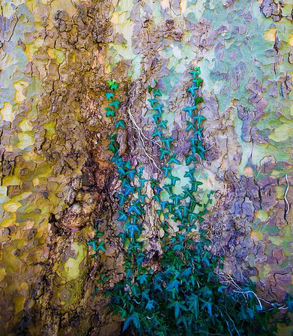 Ivy's Jigsaw