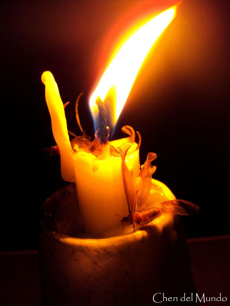 moth getting caught in a candle flame