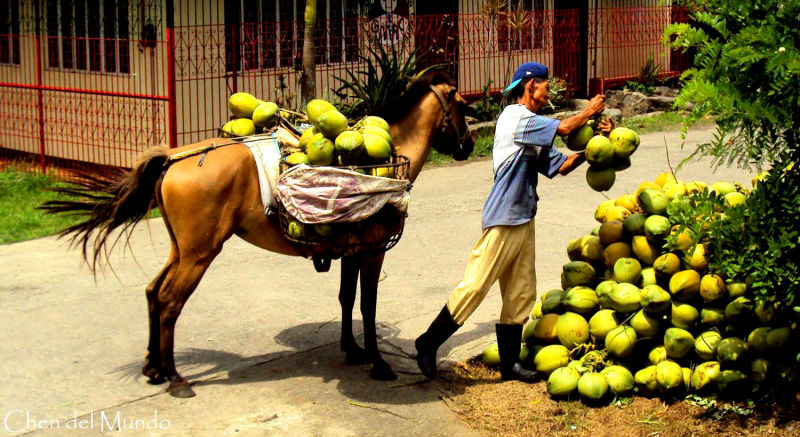 coconut picker