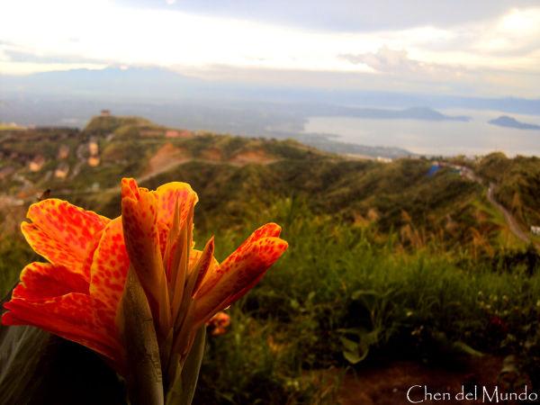 flower on vista