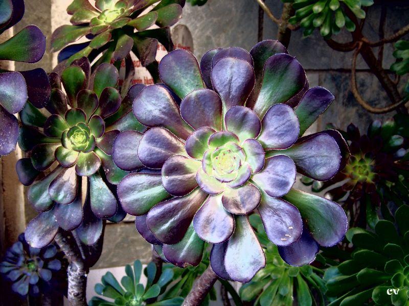 Flowery leaf or Leafy flower
