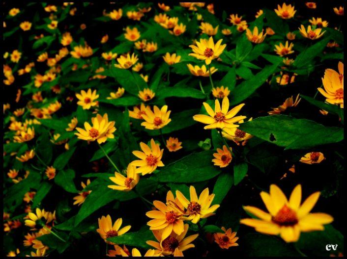 Sun: Sunlight is yellow; Flower: So is mine