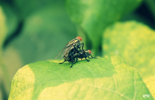 Lets 'Housefly' together :P