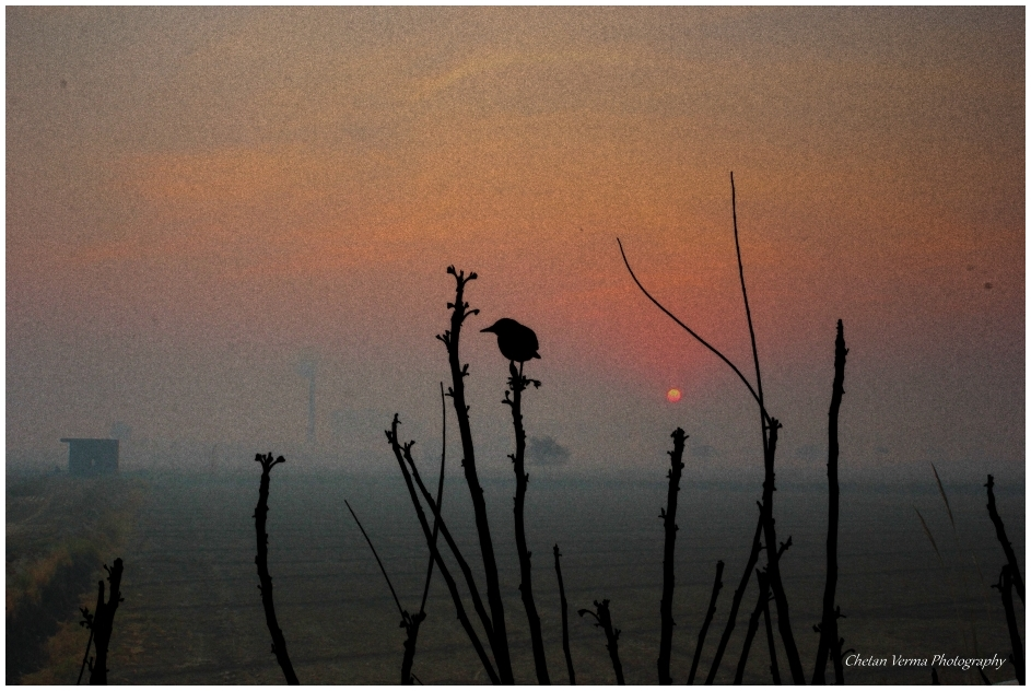 The sunset bird