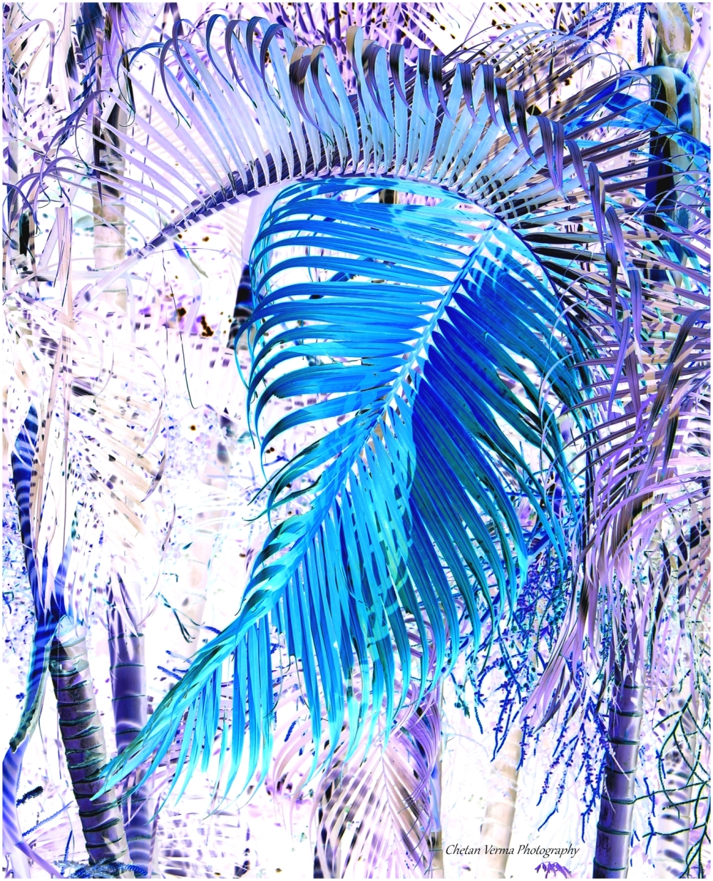 inverted colors andaman