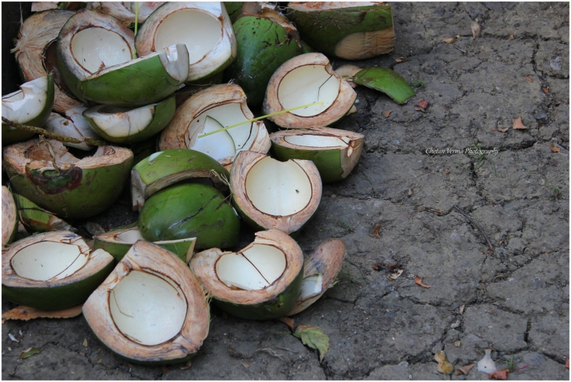 Coconut shells in Neil Island, Andaman