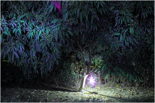A lantern under the tree