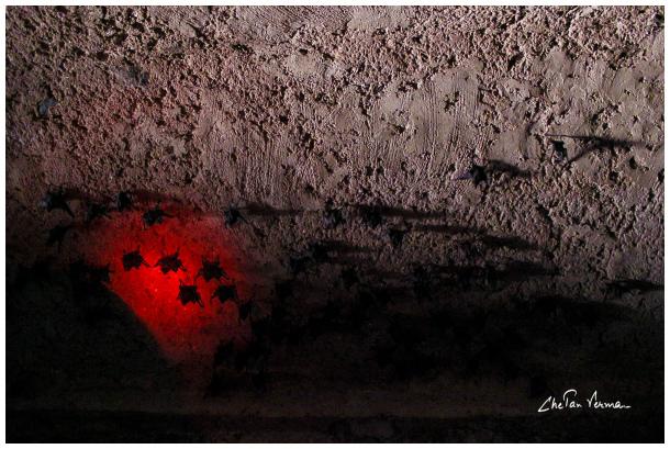 Vampires love red