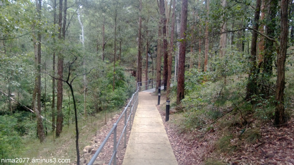 Walk through the bush Blue Mountains