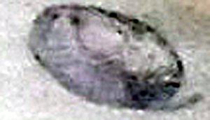 A photograph of an oval.