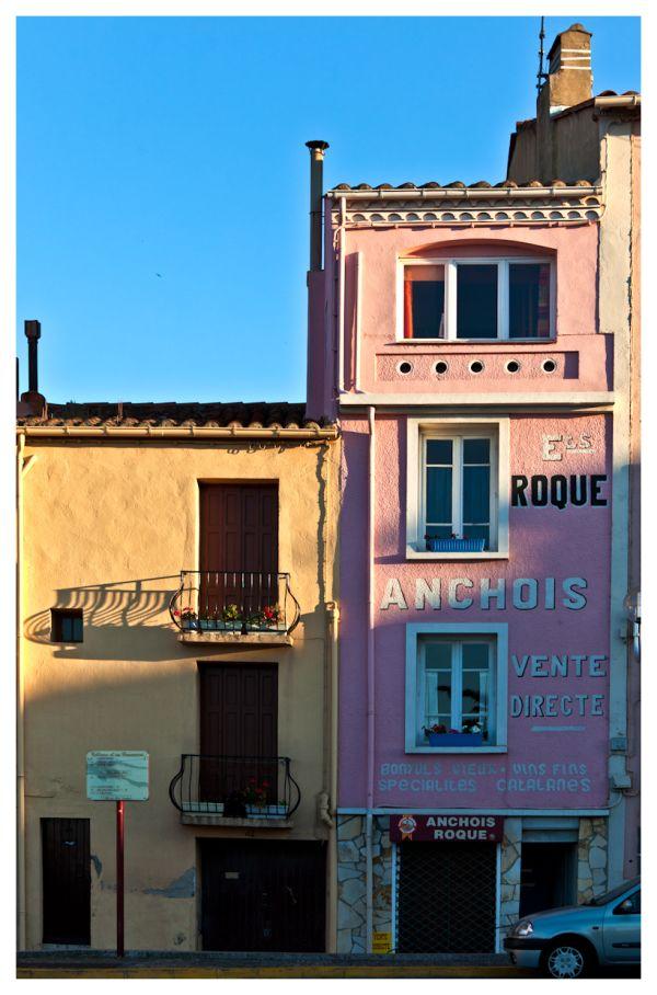 Rose anchois