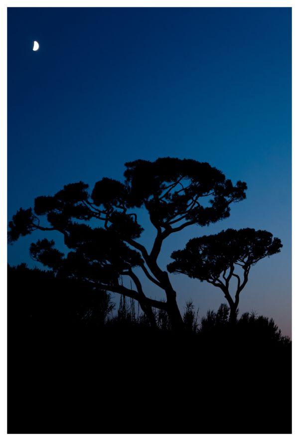 Heure bleue sous la lune