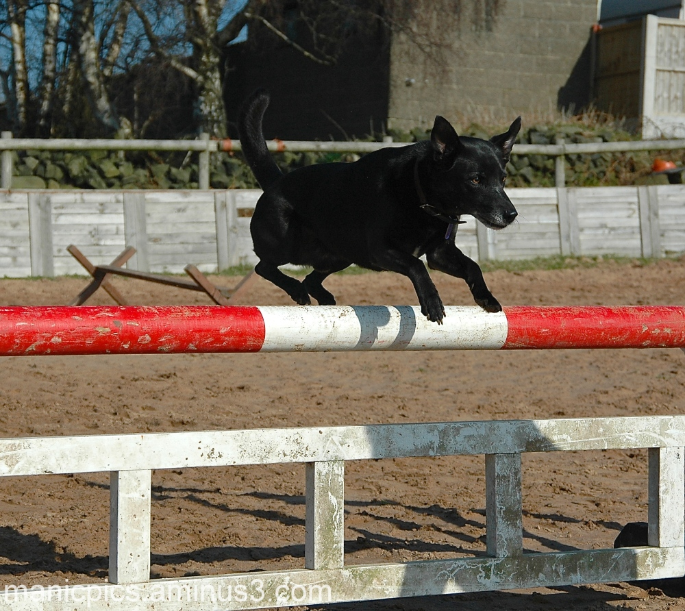Bruno.. teaching the horses to jump