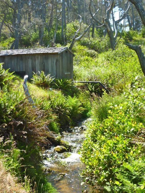 Mendocino Botanical Gardens #3