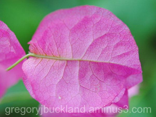 Pretty Pink Leaf