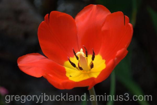 Floral Conservatory I