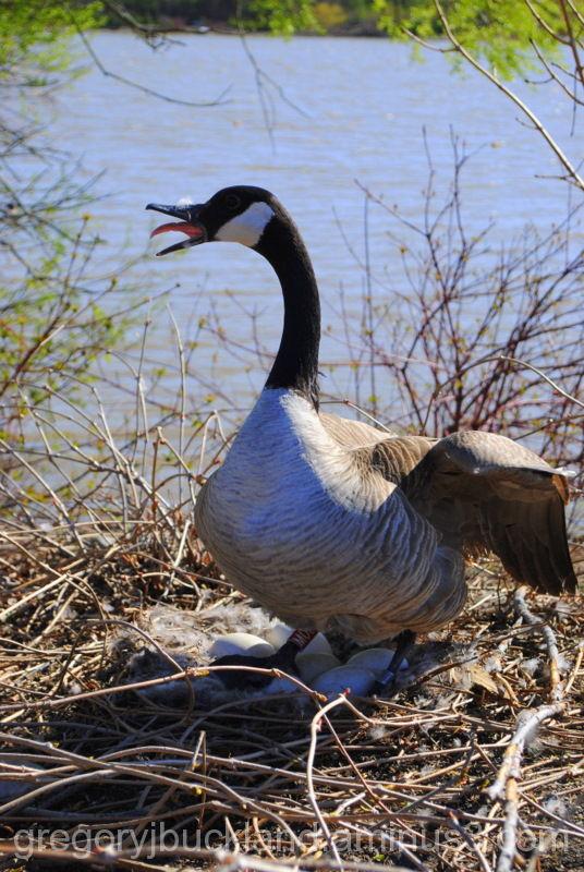 Mother Goose II