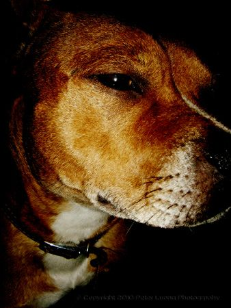 Pet Photography of my doggy