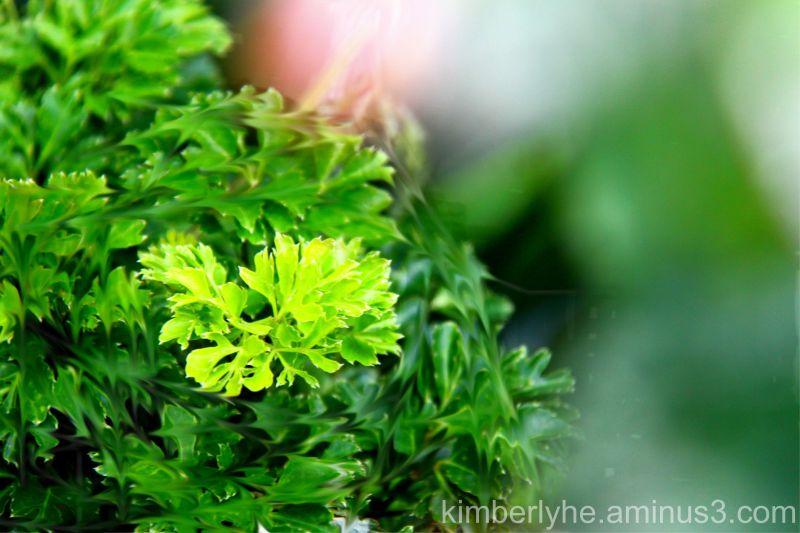 Plant, Nature, Leaf
