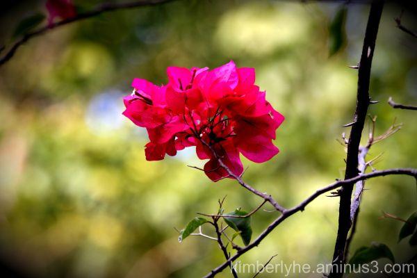 PINK FLOWER!!!