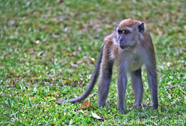 MONKEYS ARE CUTE