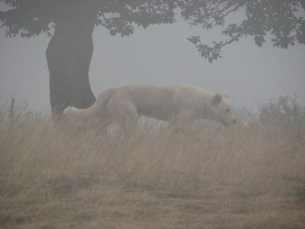 a dog in mist