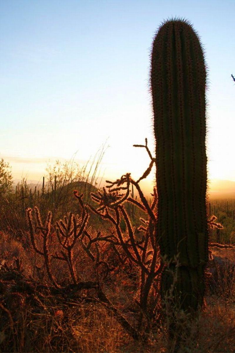 Sononoran Desert