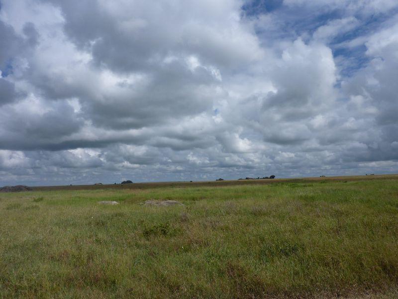 Approaching Storm (Serengeti 2/10)