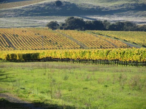 Fall in the Wine Country 2