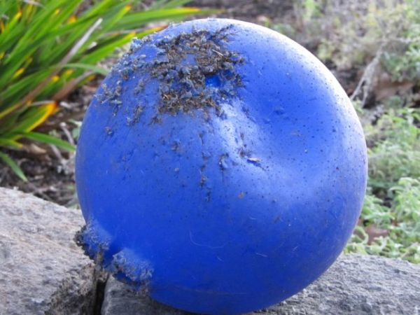 Hank's Ball